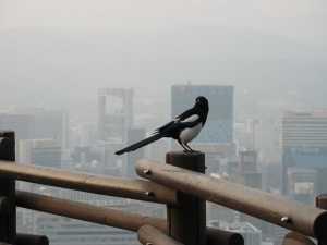 В Гонконге птицы вьют гнезда из арматуры