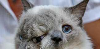 Скончался старейший двумордый кот (фото)