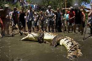 Пасха с 5-ти метровыми крокодилами
