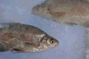 Была бы рыба