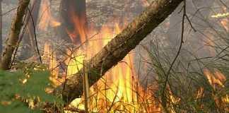 Число жертв пожаров в Австралии стремительно увеличивается
